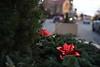 Christmas Wreath Social S 0014 JFS