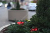 Christmas Wreath Social S 0085 JFS