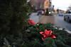 Christmas Wreath Social S 0015 JFS
