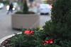 Christmas Wreath Social S 0086 JFS