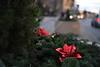 Christmas Wreath Social S 0013 JFS