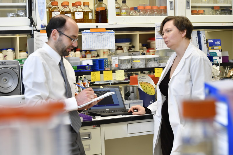 Dr. Mohamad Salkeni and Elena Pugacheva working together in the lab August 17, 2017 and in patient-care setting  bring clinical insights into the lab and push research findings out to patients. Photo Greg Ellis