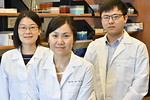 Cancer researcher Dr Wei Du is seen in her lab June 6, 2017. Dr Wei Du was awarded 0,000 by the Leukemia Research Foundation to investigate a method for increasing the effectiveness of st ...