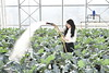 Marissa Frazie an undergraduate student at WVU's Davis college poses for an Environmental Portrait in the green house November 30, 2017. Photo Greg Ellis