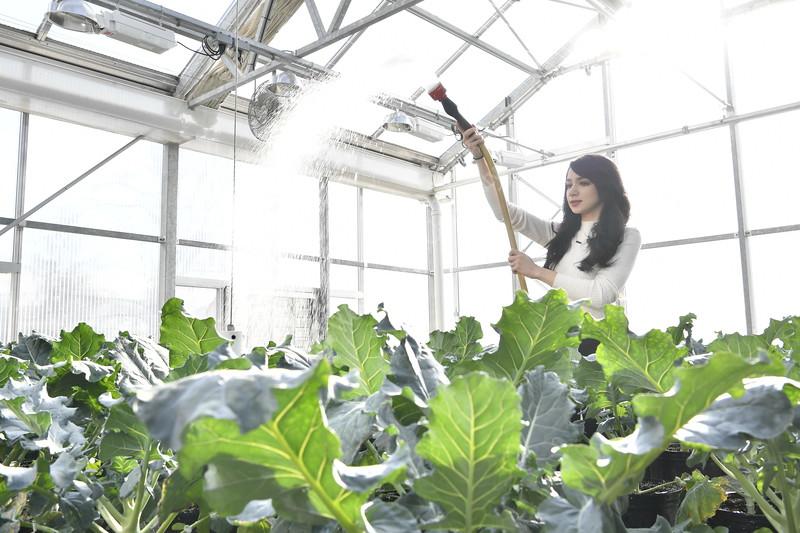 Marissa Frazie an undergraduate student at WVU's Davis college poses for an Environmental Portrait in the green house November 30, 2017. Photo Greg Ellis