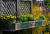 WVU Extension Service Master Gardeners create demonstration gardens for the WV State Fair August 16, 2018. Photo Greg Ellis
