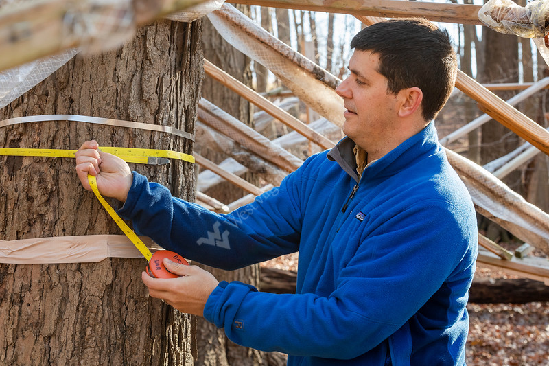 Brenden McNeil Assistant Professor of Geography at West Virginia University measures the girth of a Sugar Maple on WV Land Trust property as part of his Drought Study research. December 17,2018. Photo Greg Ellis