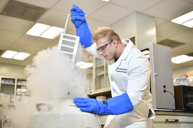 WVU Biomedical Researcher Quincy Hathaway PhD  removes cells from a nitrogen chilled vessel in his lab at the HSC WVU School Of Medicine June 7, 2018. Photo Greg Ellis