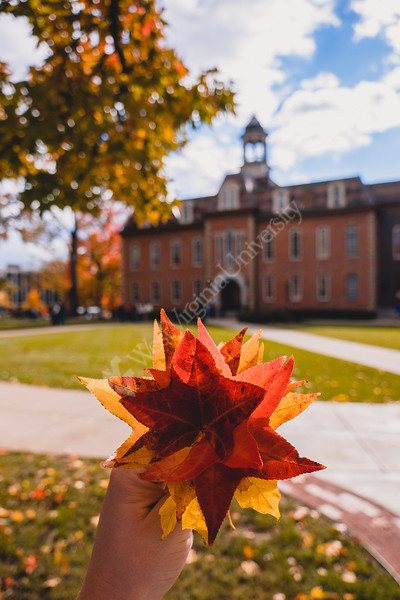 A fall bouquet in Woodburn Circle.
