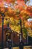 Fall foliage on display outside Martin Hall.