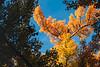 Fall leaf details.