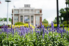 Flowers in photogaphed in front of Oglebay Hall May 29, 2019. Photo Parker Sheppard