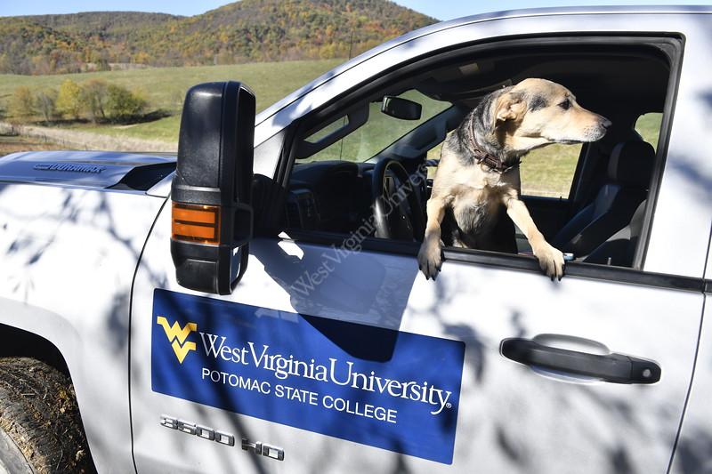 (WVU Photo/Brian Persinger)