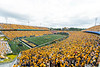 Full stands for the gold rush game. WVU's football team faced off against NC State on September 14, 2019. (WVU Photo/Parker Sheppard)