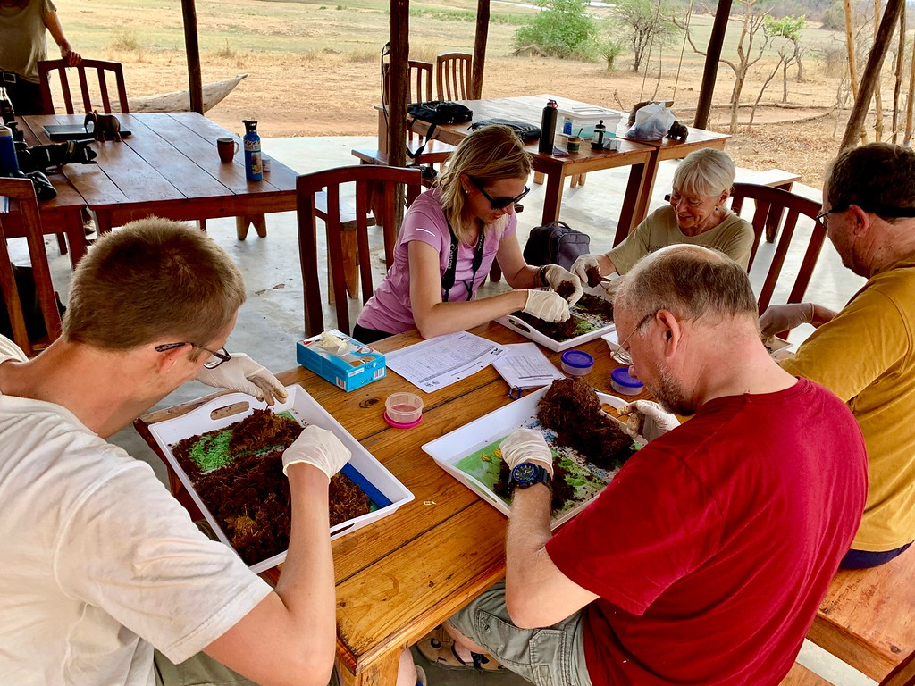 a Biosphere Expedition team sorts elephant dung in Vwaza Marsh Wildlife Reserve