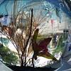 JudyC_Glass-3