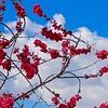 Larry_1_Spring