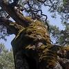 Stan_3 Tree w: moss
