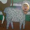 Lincoln the lamb