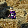 Linc in the hay maze.