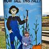 How tall this fall-Lincoln 2012
