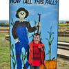 How tall this fall-Chandler 2012