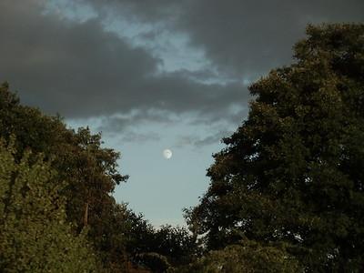 moon between trees