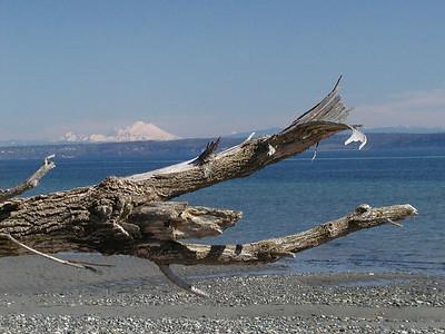 Baker_driftwood