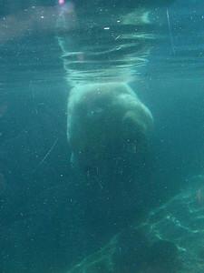 polarbear's end
