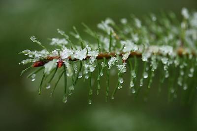 christmas_snow08