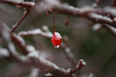 christmas_snow10