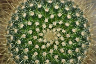 cacti02