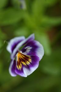 blooming07