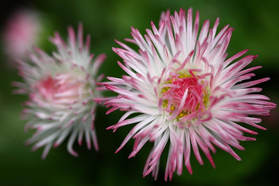 blooming05