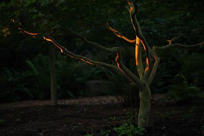 maplelight