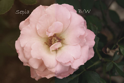 pastel-3
