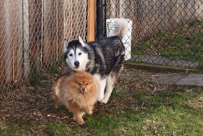 Wolf and Bear Farley