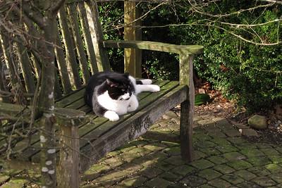 benchcat
