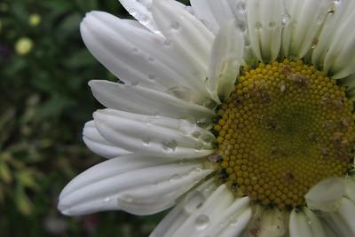 daisy02