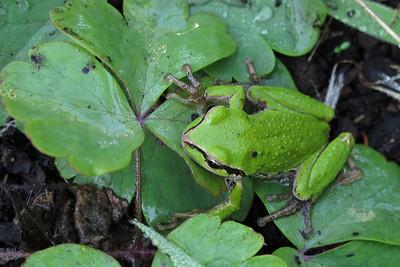 frog02