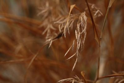 driedgrass