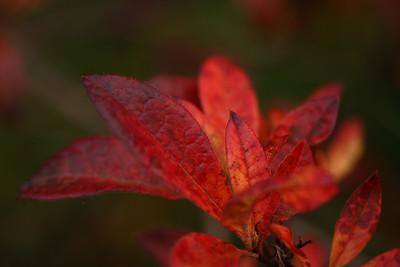 leaves05