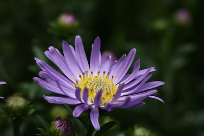 aster02