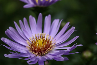 aster01