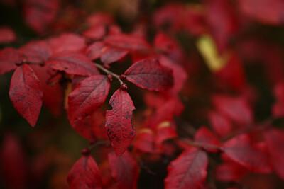 leaves04