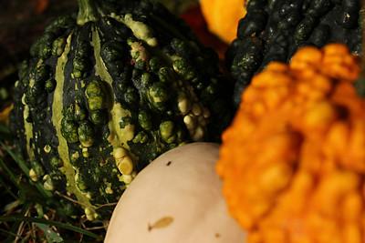 gourds14