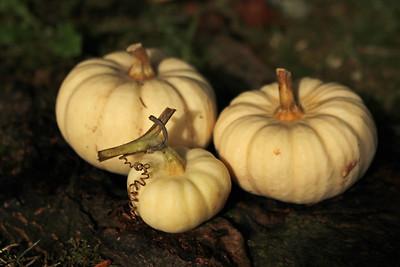 gourds03