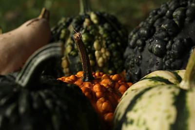 gourds06