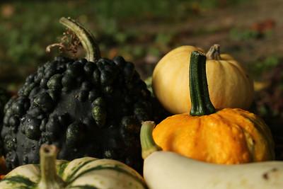 gourds05