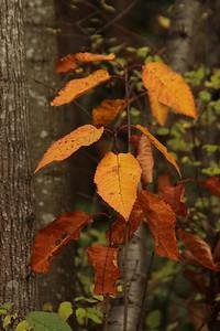 leaves06